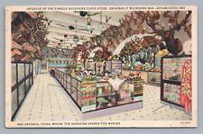 Buckhorn Curio Store Interior—San Antonio TX Rare Vintage Shop Linen Taxidermy