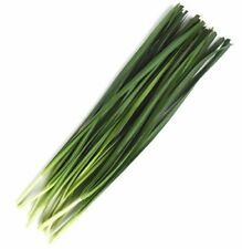 Chinese Chives Seeds - 1.0 grams