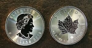 Two Silver Maples - Free Shipping