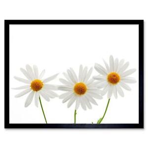 Daisies Daisy White Flower Bloom 12X16 Inch Framed Art Print