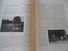 Les Marchés aux Bestiaux La mort pour la vie 1903 Article de presse