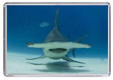 HammerHead Shark Fridge Magnet 01
