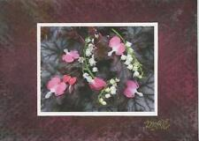 ACEO DICENTRA LILY CORA BELL HAND SIGNED ARTIST PRINT / W ORIGINAL PASTEL ART