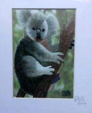Koala In Tree - Silk Embroidery Art - Signed By. Embroidery Wonders Artist