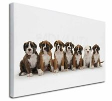 More details for boxer dog puppies x-large 30