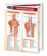 Muscular System - Medical Quick Reference Guide