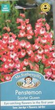 SEEDS  FOTHERGILLS FLOWER  PENSTEMON SCARLET QUEEN SEED RRP £2.65
