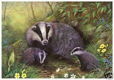 Babington - Badger and Cubs - MEDICI POSTCARDS