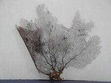 "16"" x 14"" Large Natural Black Color Caribbean Sea Fan Reef Coral 16/130"