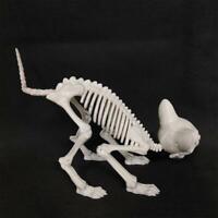 Halloween Dog Skeleton Prop Animal Bone Model Horror Party Decoration W0T4