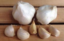 CALIFORNIA SOFTNECK GARLIC BULBS - 1/2 lb. bag - Organic Non & GMO