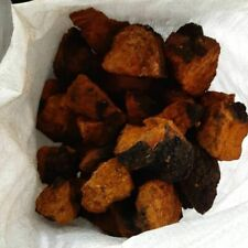 Organic Siberian Chaga Mushroom Health Complex for raising immunity 1 lb