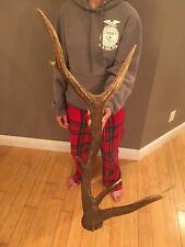 6 Pt Elk Antler Shed Wild Idaho Horn Lamp Art Decor Mount Deer Moose #1 Unique