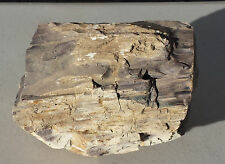 Opalized Petrified Wood Limb Section / Unpolished (PW-MFR412)