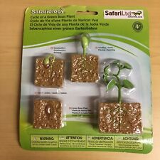 Life Cycles Of A Green Bean Plant 662416 SAFARI Products Set Of 4 Replicas
