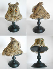 ANTIQUE TAXIDERMY BIRD - OISEAU Empaillé Taxidermie / Owl Hibou