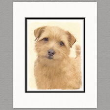 Norfolk Terrier Original Art Print 8x10 Matted to 11x14