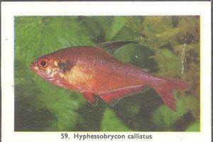 Rizla (NL) - Exotic Aquarium Fish, Series 2, overprint back - 59 - Serpae Tetra