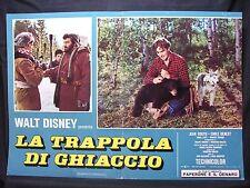 FOTOBUSTA CINEMA - TRAPPOLA DI GHIACCIO - WALT DISNEY - 1961 - AVVENTURA - 01