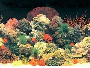 "15"" Tall Black Coral Background Plastic Poster Picture Image for Aquarium / Viv"