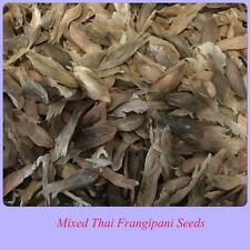 Frangipani / Plumeria Pack of 20 Beautiful Mixed Thai Seeds