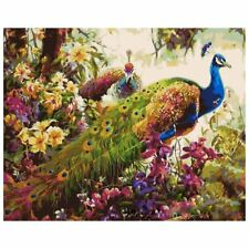 16x20 inch Acrylic Paint by Numbers Kit Oil On Cloth Picture Peacock D9N2