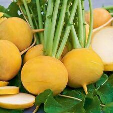 Seeds Turnip Golden Ball Yellow Vegetable Organic Heirloom Russian Ukraine
