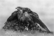 Limited edition artists print- Goss Hawk