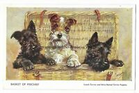 Artist Mabel Gear Basket Of Mischief Dogs Vintage Postcard 9.3
