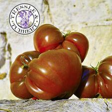Rare Black Russian Tomato 15 seeds UK SELLER