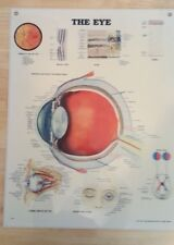 Anatomical Chart Company - The Eye 1986 - Laminated - Educational
