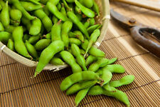 Soy Bean-Edamame  (60 seeds)- Organic Heirloom from Life-Force Seeds