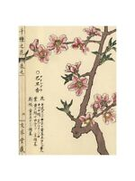 Kono Bairei - Amandou or almond blossom Prunus amygdalus 1900. Print 60x80cm