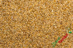 (0,67€/kg) Futterweizen 25 kg Weizen gereinigt Hühner Geflügelfutter Vogelfutter