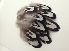 15 x 4-6cm Black and White Amazing Reeves Pheasant Feathers DIY Craft Millinery