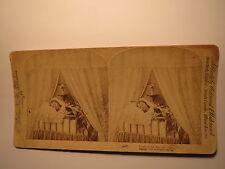 Trials of the Day are Over - 1889 Kind schläft mit Katze / Stereofoto Stereobild