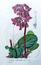 Lithograph Purple Original Art Prints