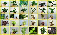 Plantas de acuario.Pecera, gambario,paludario.120 ESPECIES.Envio 24/48 H
