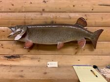 Real Skin Mount Musky Northern Pike Walleye Ron Lax Muskey Fish Taxidermy Fm3