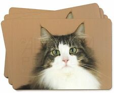 Tabby and White Cat Picture Placemats in Gift Box, AC-49P