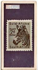Zebra on 2 d. South African Postage Stamp Vintage Ad Trade Card