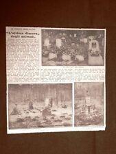 Berlino nel 1925 Il Cimitero degli animali in Boolitz Forno crematorio Germania