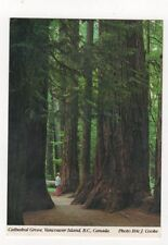 Cathedral Grove Vancouver Island 1998 Postcard Canada 589a