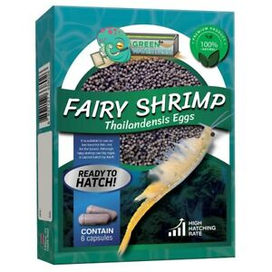 Fairy Shrimp Thailandensis Eggs Live Fish Food for Hatching and Feed Betta Fish