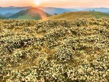 Model Scene Grass Mat Low Bushes Late Summer F503 Scenery Landscape RR HO Scale