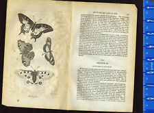 Butterflies - 1830 Goldsmith Copper Plate Natural History Engraving