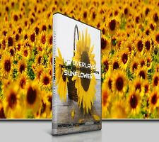 200 SUNFLOWER FLOWER DIGITAL PHOTOSHOP OVERLAYS BACKDROPS BACKGROUND PHOTOGRAPHY