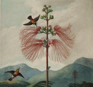 OKA, India Jane STUNNING Super High Quality Botanical A3 Art Print