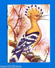 ANIMALI - Lampo 1964 - Figurina-Sticker n. 208 - UPUPA -New