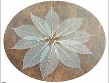 100 natural skeleton leaves for crafts weddings scapbooks free post !